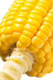 Image of Corn Stock Photography