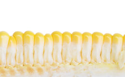 Image of corn Royalty Free Stock Images