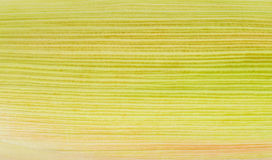 Image of corn Royalty Free Stock Photos