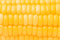 Image of corn Stock Photos