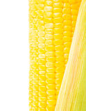 Image of corn Royalty Free Stock Photos