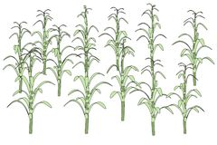 Image of corn stalks Royalty Free Stock Image