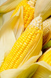 Image of Corns Royalty Free Stock Image