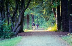 Image of couple with dog walking through the woods from behind stock photos