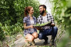 Image of couple of farmers seedling sprouts in garden Stock Images