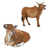 Image of cow. Stock Photography