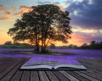 Image créatrice de concept de lavande dans le coucher du soleil images libres de droits
