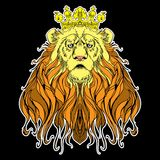Image of crowned lion on black Stock Image