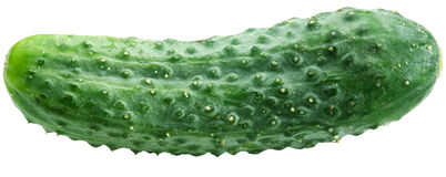 Image of cucumber on white background. Stock Photography
