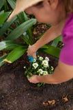 Image cultivée de la femme employant des cisailles sur l'usine fleurissante image libre de droits