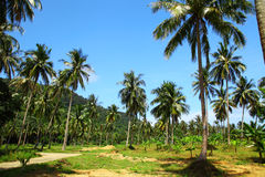 Image of cultivated palms Stock Photo