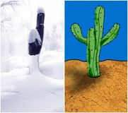 Image of the cut down tree in the winter in a snow and a cactus Royalty Free Stock Photography