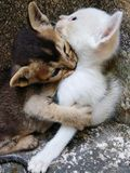 Image of the cute kittens. royalty free stock photos