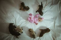 Image of cute little girl in pink suit and puppies Royalty Free Stock Photos