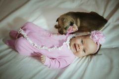 Image of cute little girl in pink suit and puppies Stock Images
