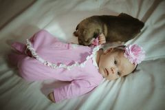 Image of cute little girl in pink suit and puppies Royalty Free Stock Image