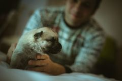 Image cute little puppy in hands of young man Royalty Free Stock Photo