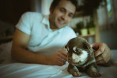 Image of cute little puppy in hands of young man. Closeup indoor royalty free stock image
