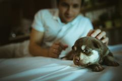 Image of cute little puppy in hands of young man Stock Image