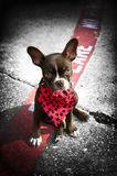 Image of a cute puppy with red bandana Stock Images