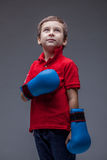 Image of cute young boxer posing in studio Stock Photography