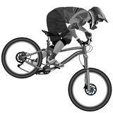 An image of a cyclist descending on a mountain bike on a slope Stock Photography