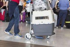Image d'éditorial de Documantary Bagage d'aéroport avec des valises, femme non identifiée d'homme marchant dans l'aéroport, stati Photographie stock