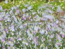 Image d'été avec des fleurs soufflant dans le vent Photographie stock libre de droits