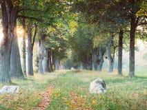 Image d'allée en automne pendant le coucher du soleil photographie stock libre de droits