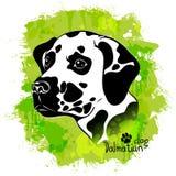 Image d'aquarelle de la tête d'un chien de la race dalmatienne de race Images libres de droits