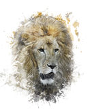 Image d'aquarelle de Lion Head Images libres de droits