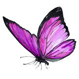 Image d'aquarelle d'un papillon sur un fond blanc illustration libre de droits