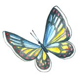 Image d'aquarelle d'un papillon sur un fond blanc Illustration Stock