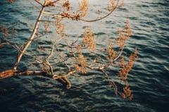 Image d'arbre d'automne prise contre le lac bleu-foncé Image libre de droits