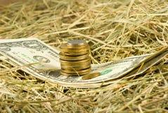 Image d'argent des dollars sur le plan rapproché de foin Photos libres de droits