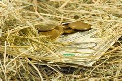 Image d'argent des dollars sur le plan rapproché de foin, Images libres de droits