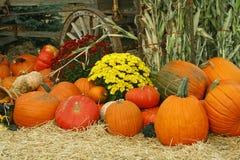 Image d'automne Photo libre de droits
