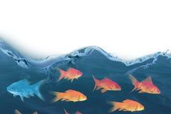 image 3D composée de la vue de côté de la natation de poissons Photos libres de droits