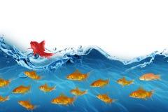 image 3D composée de la vue de côté de la natation de poissons Image libre de droits