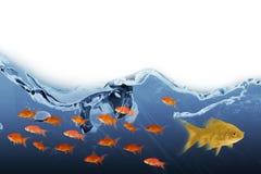 image 3D composée de la vue de côté de la natation de poissons Image stock