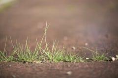 Engazonnez par le trottoir concret 03 photo stock