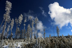 Image d'hiver en parc national de Yellowstone Photo libre de droits