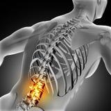 image 3D médicale de mâle avec l'épine inférieure accentuée Photos stock
