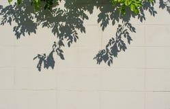 image d'ombre de feuille d'arbre sur le mur images stock