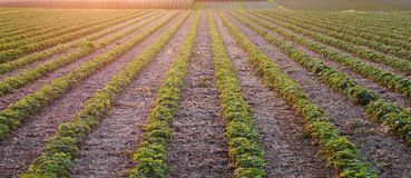 Image d'un beau coucher du soleil avec des champs et le paysage images stock