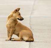 Image d'un chien brun image libre de droits