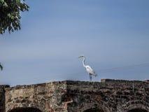 Image d'un héron sur un mur de briques avec un fond de ciel bleu image libre de droits