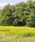 image d'un lac et d'une forêt étonnants Image stock