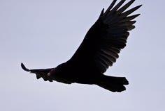 image d'un vautour dans le ciel Photographie stock