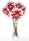 Image with dahlias. A bouquet of dahlias in a transparent vase on a white background Stock Photography